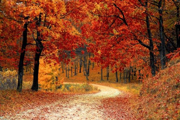 autunno psicologo bari